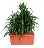 Planter 900mm 5528